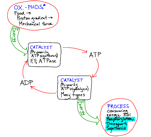 ATP The Big Picture